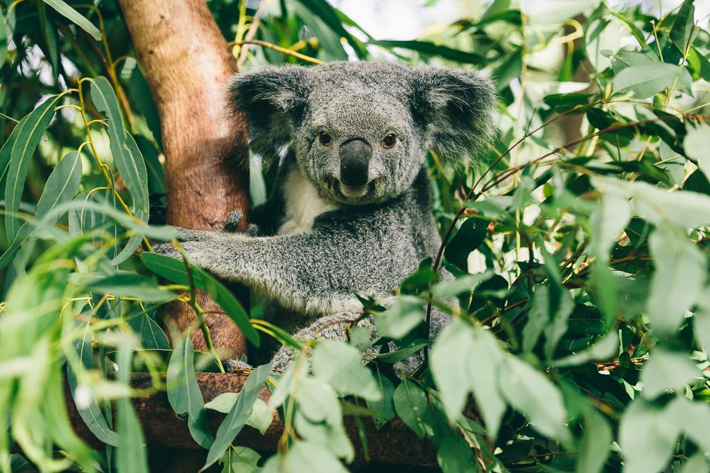 Melissa_Findley-Townsville-Blog--08