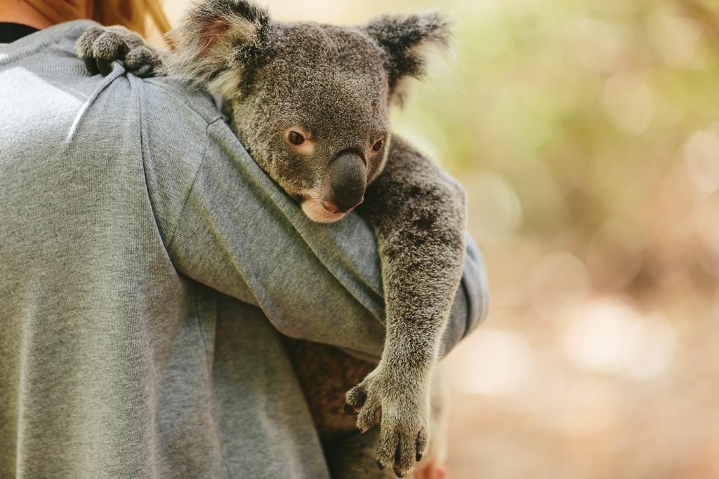 Melissa_Findley-Townsville-Blog--24