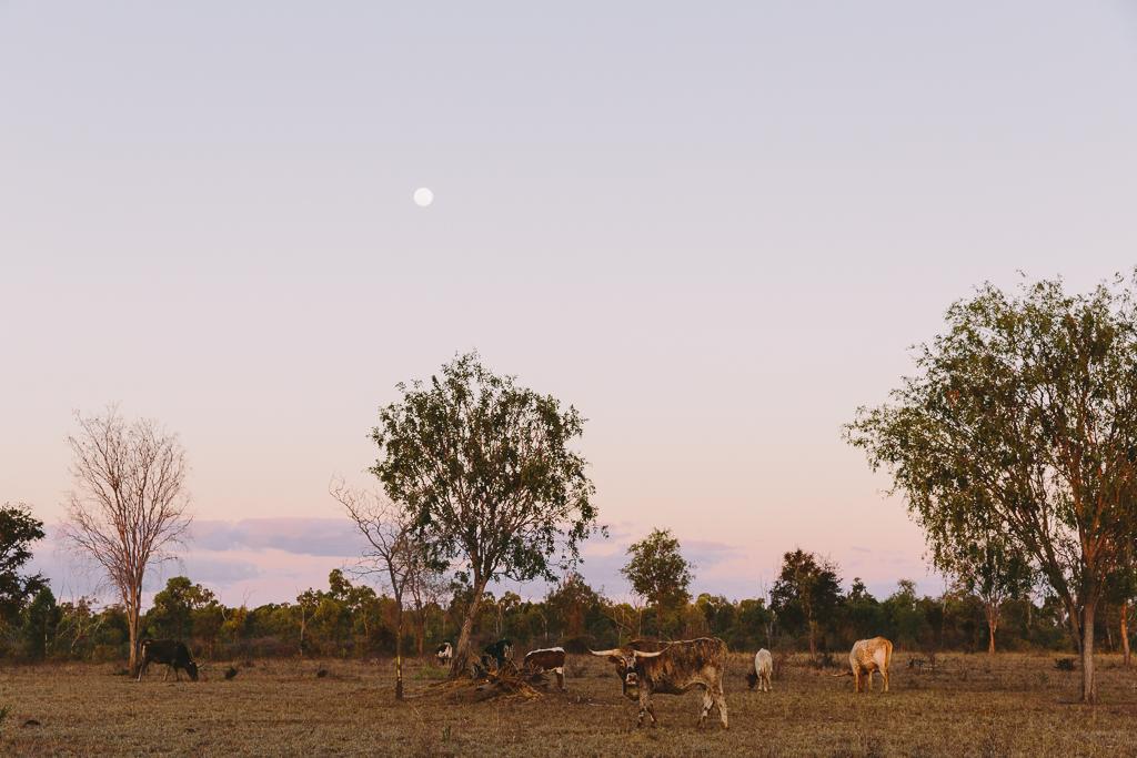 Melissa_Findley-Townsville-Blog--39