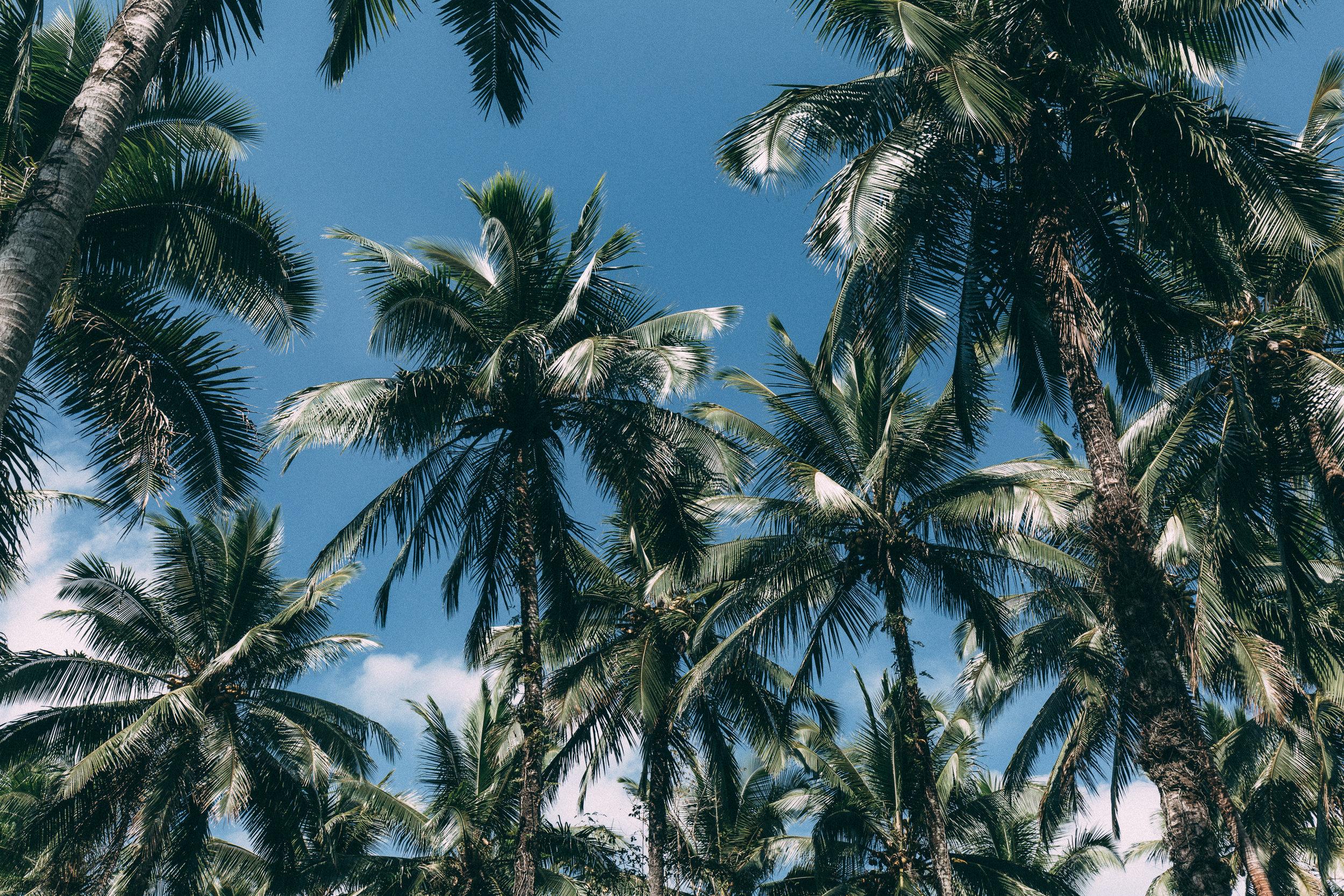 Melissa_Findley-Vanuatu-MFBlog-20