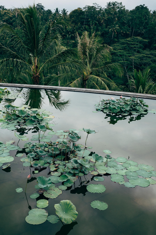 Melissa_Findley-Bali-Blog-19