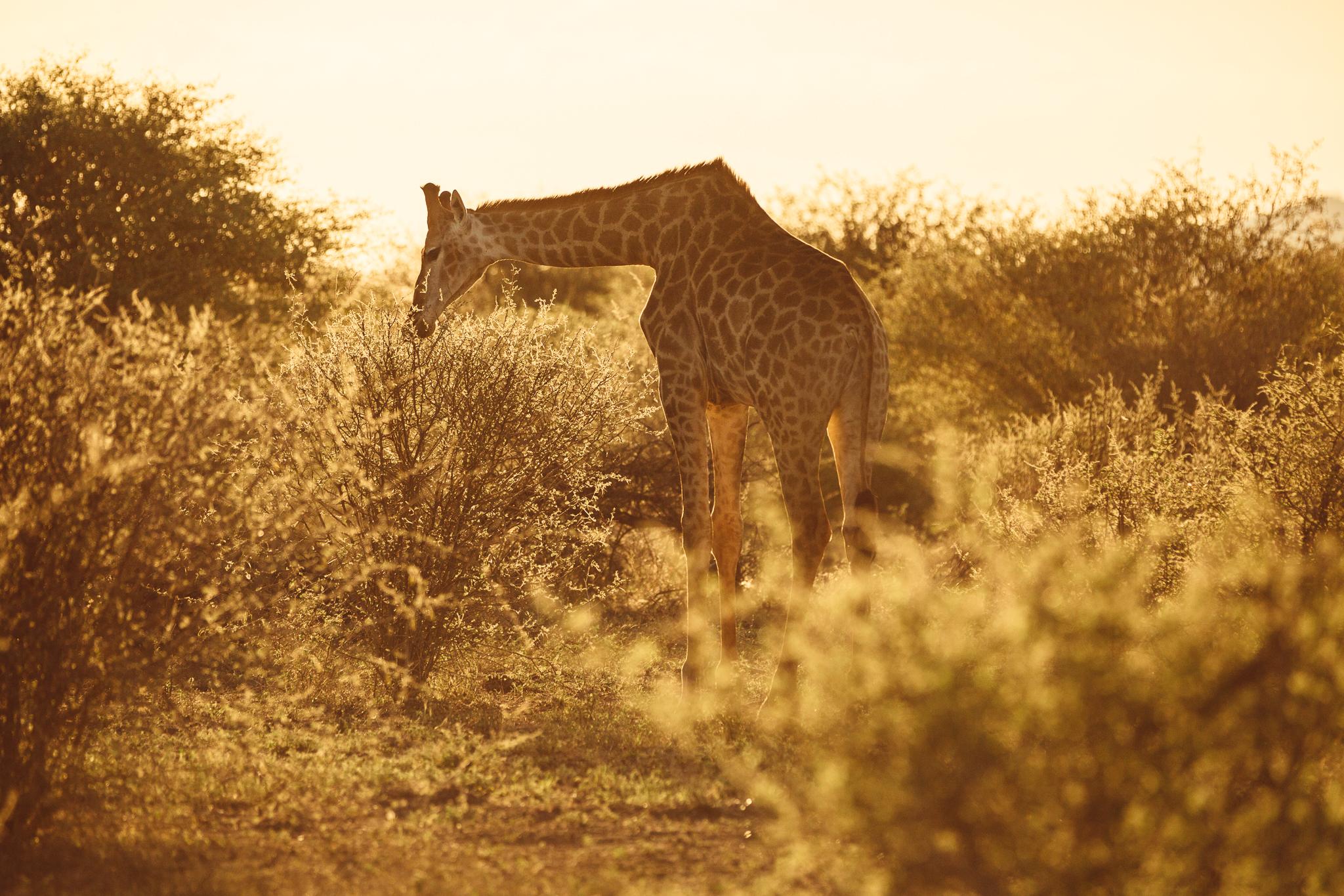 Melissa_Findley-SouthAfrica-Blog-20.jpg