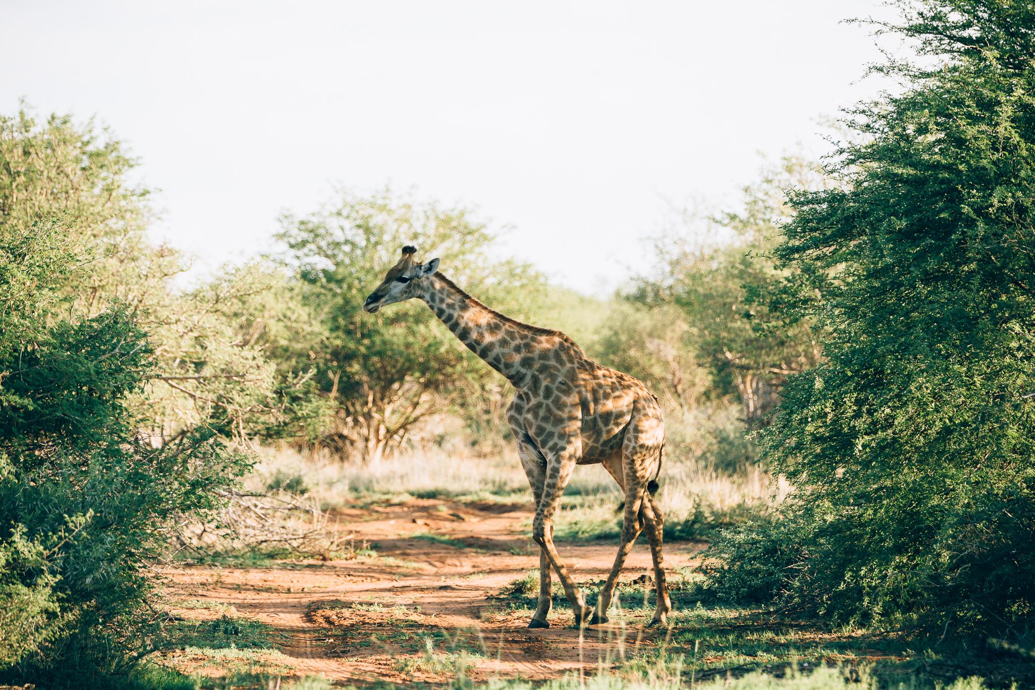 Melissa_Findley-SouthAfrica-Blog-44.jpg