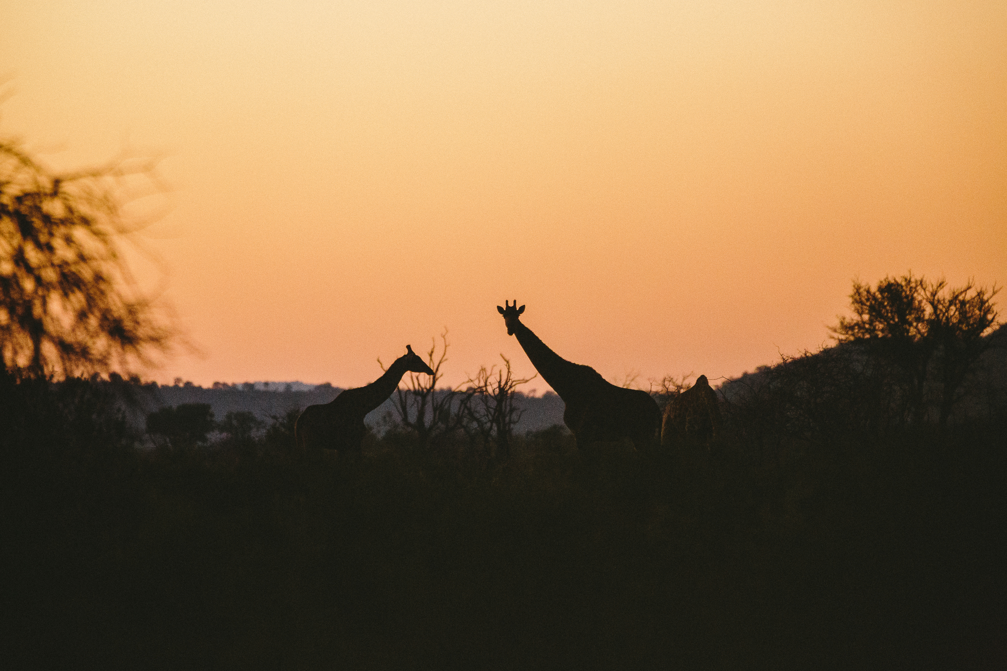 Melissa_Findley-SouthAfrica-Blog-47.jpg