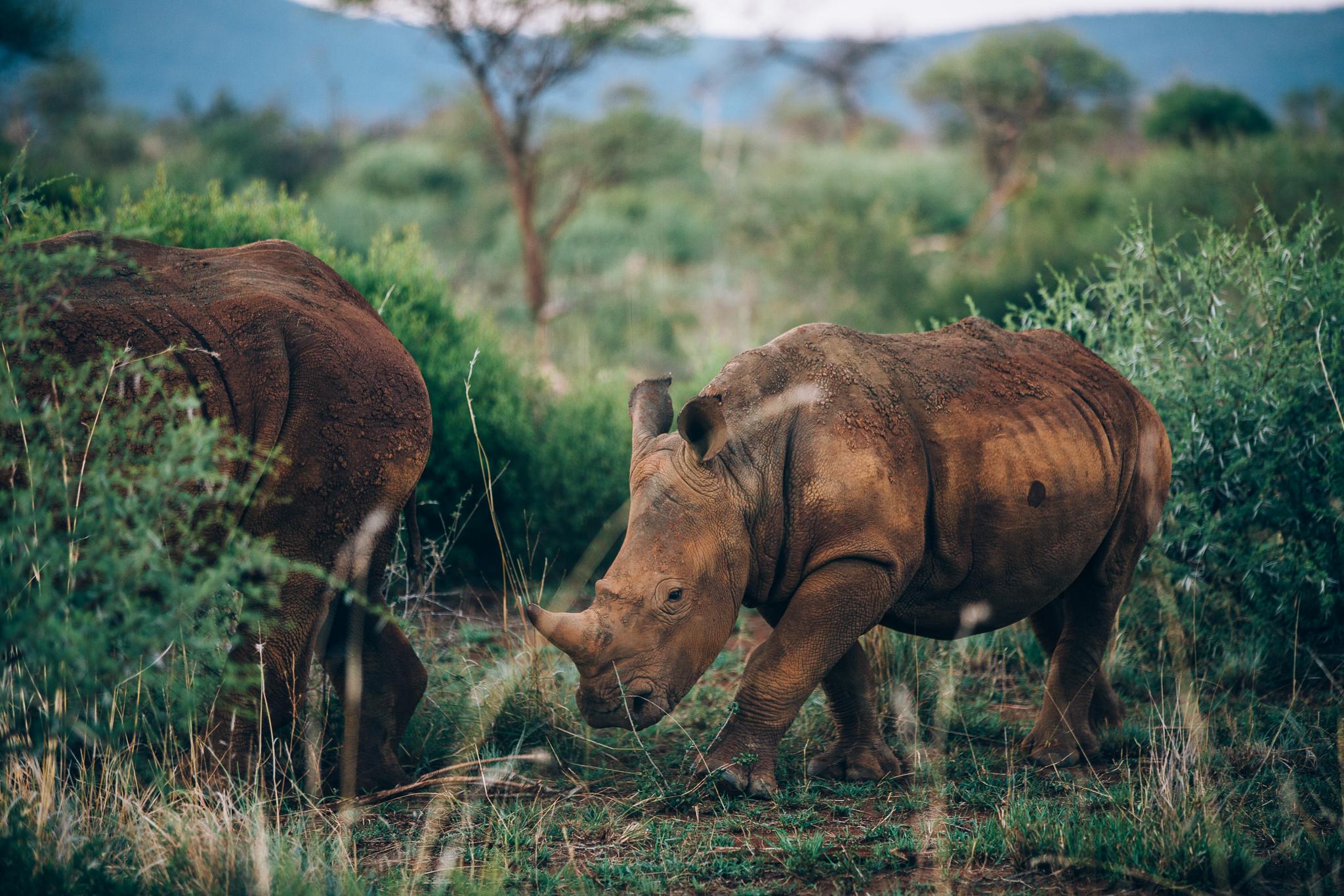Melissa_Findley-SouthAfrica-Blog-53.jpg