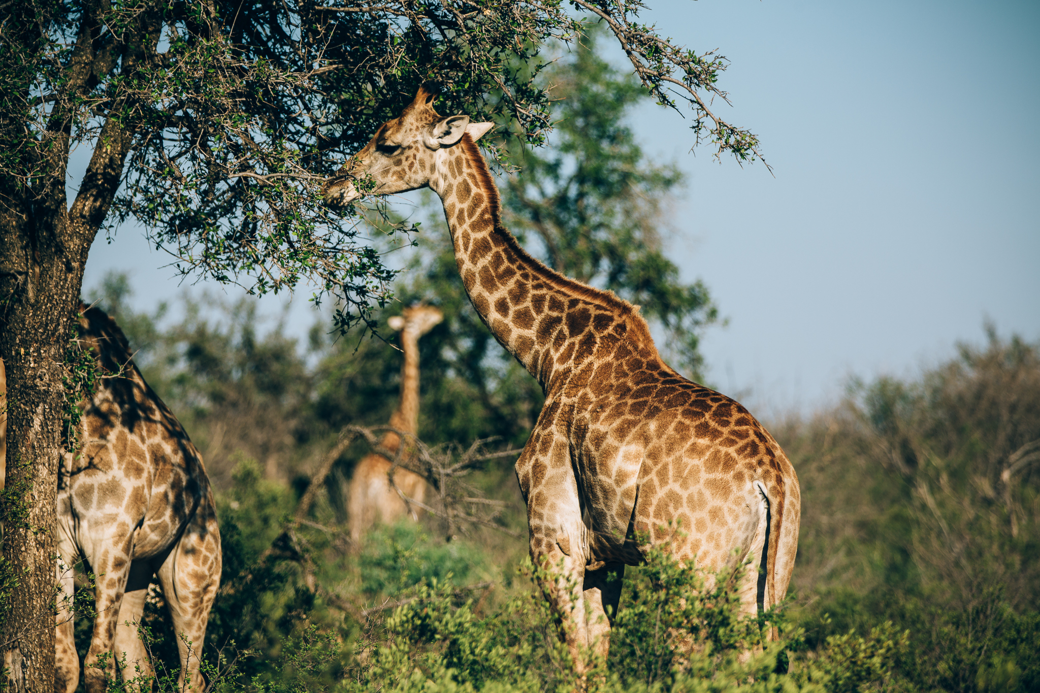 Melissa_Findley-SouthAfrica-Blog-54.jpg