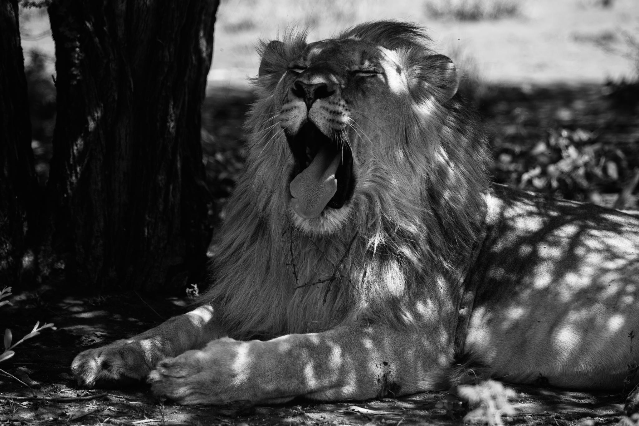 Melissa_Findley-SouthAfrica-Blog-79.jpg