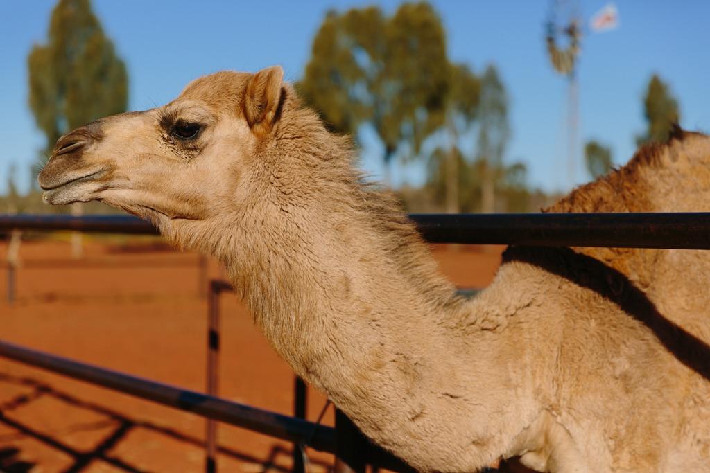 Melissa-Findley-Red-Centre-Uluru-34.jpg
