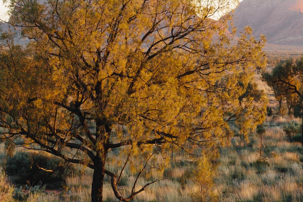 Melissa-Findley-Red-Centre-Uluru-53.jpg