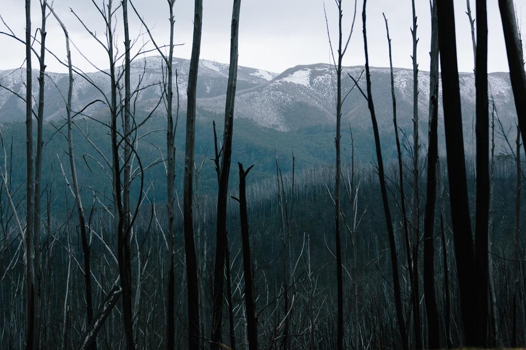 Melissa-Findley-Peppers-Rundells-Alpine-Lodge-12.jpg
