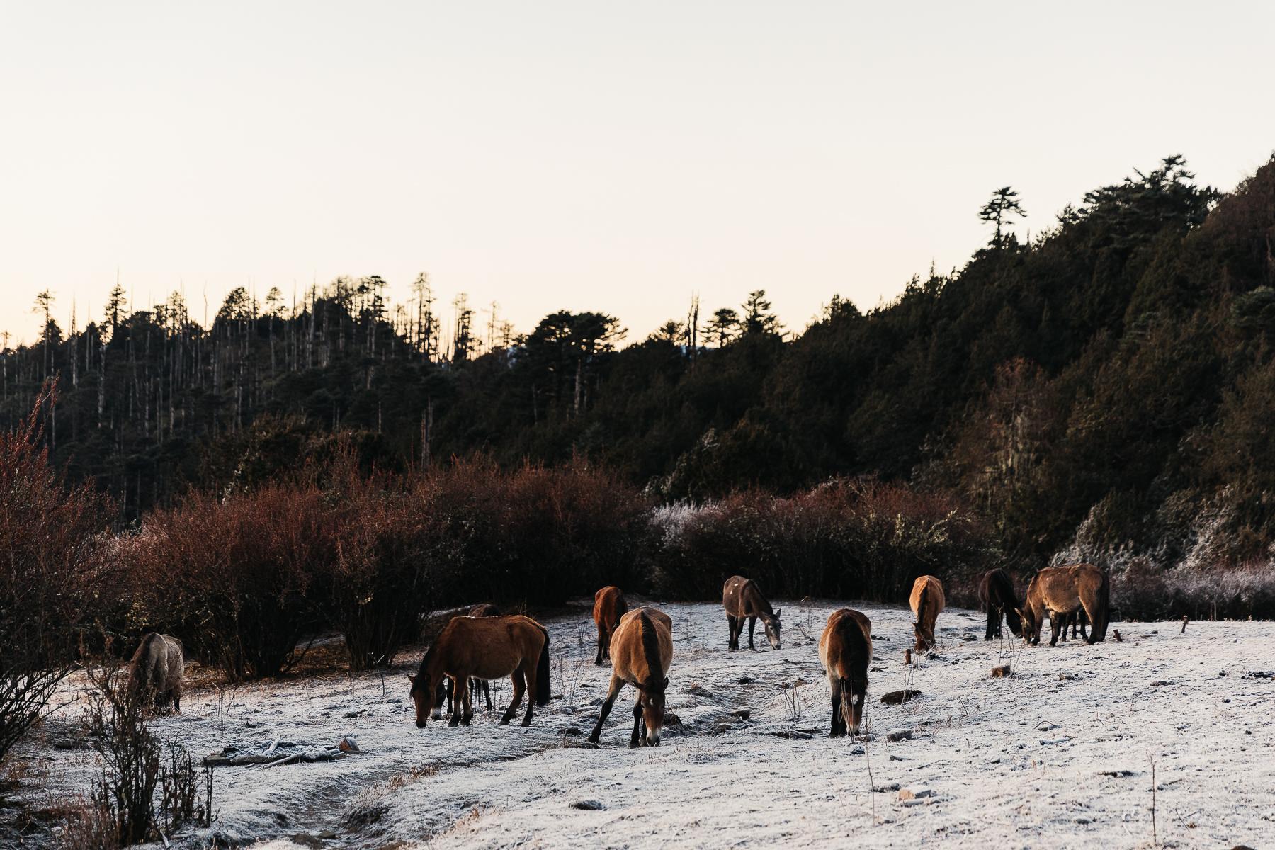 MelissaFindley-Bhutan-blog-32.jpg