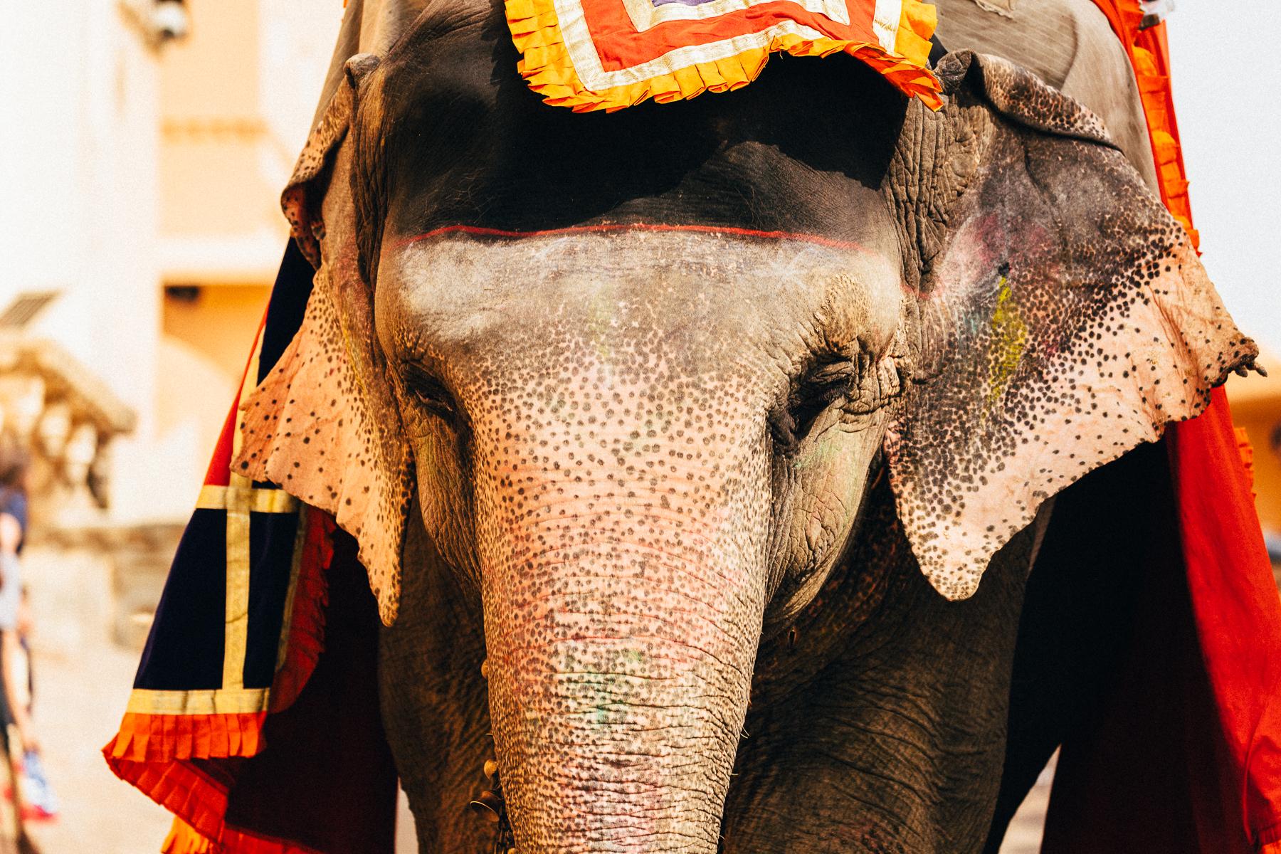 MelissaFindley-INDIA-Blog-38.jpg