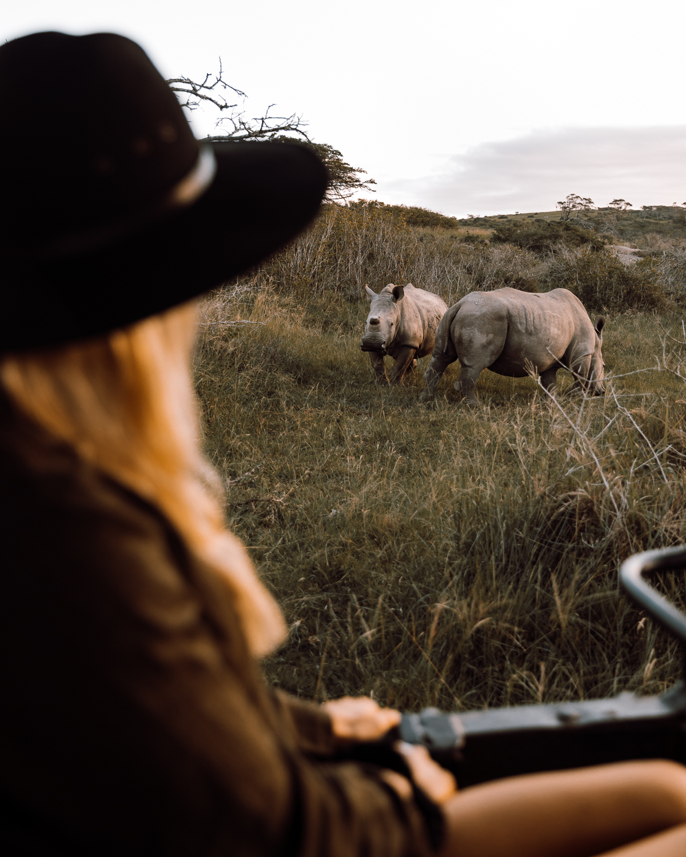 Brinkley Davis    observing White Rhinos.
