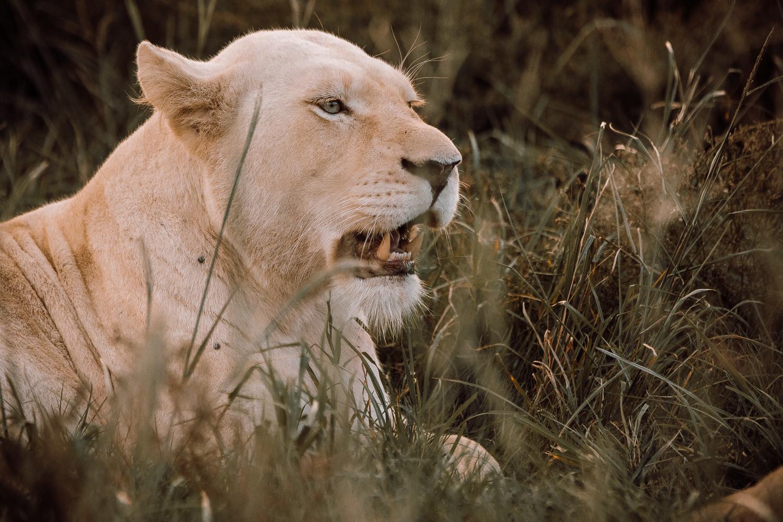Melissa_Findley-SouthAfrica-Gadventures-BLOG--9.jpg