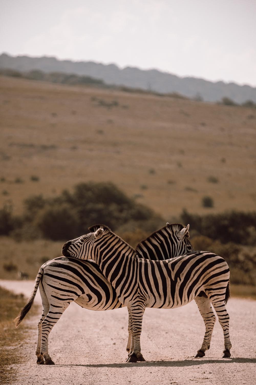 Melissa_Findley-SouthAfrica-Gadventures-BLOG--13.jpg