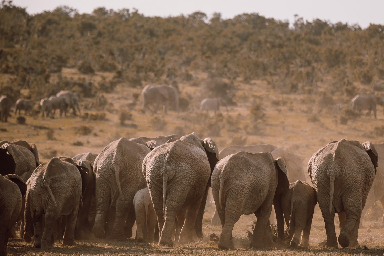 Melissa_Findley-SouthAfrica-Gadventures-BLOG--17.jpg