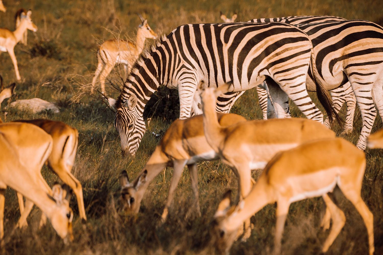 Melissa_Findley-SouthAfrica-Gadventures-BLOG--19.jpg