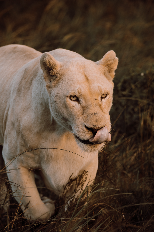 Melissa_Findley-SouthAfrica-Gadventures-BLOG--25.jpg