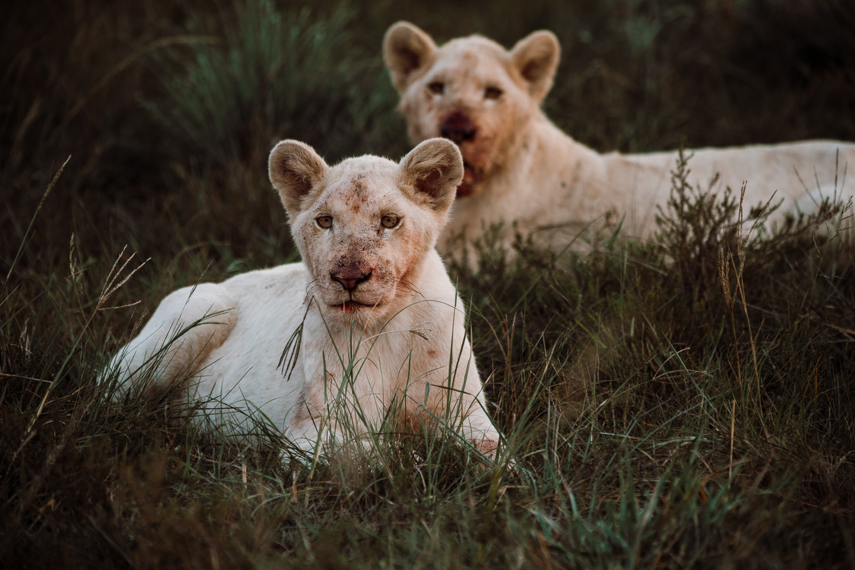 Melissa_Findley-SouthAfrica-Gadventures-BLOG--29.jpg