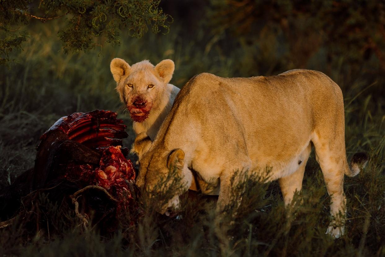 Melissa_Findley-SouthAfrica-Gadventures-BLOG--2.jpg