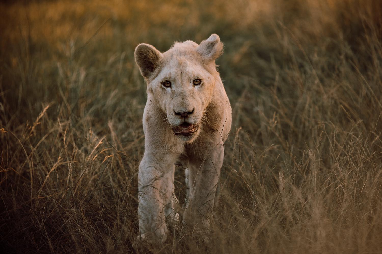 Melissa_Findley-SouthAfrica-Gadventures-BLOG--5.jpg