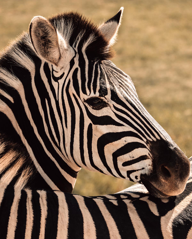 Melissa_Findley-SouthAfrica-Gadventures-BLOG--15.jpg