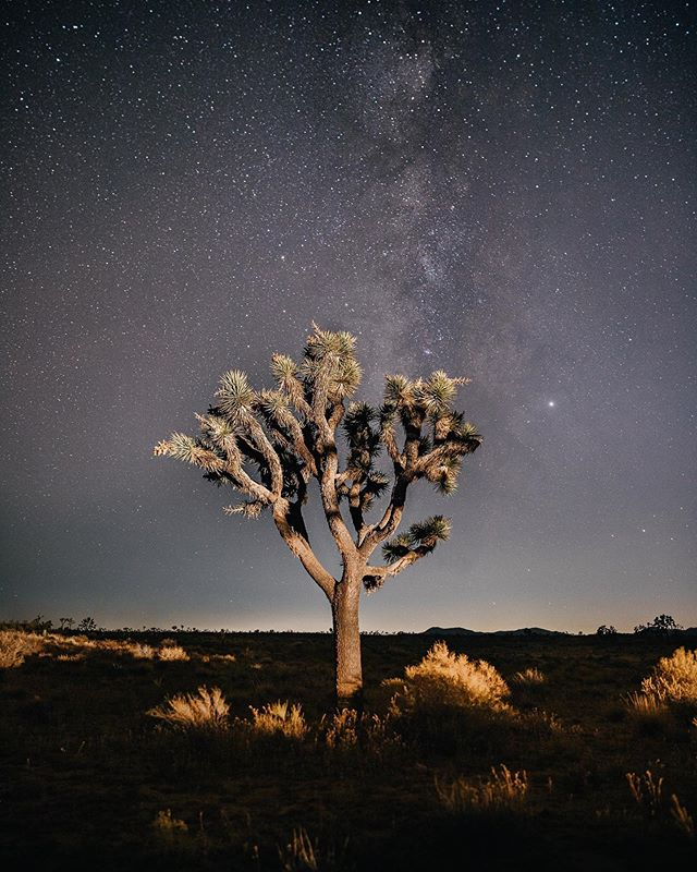 "Feeling small under a vast night sky dripping with stars in @joshuatreenps • ""Sempre ad astra."" - - Always to the stars. 🖤🌌🌵 @visitcalifornia #visitcalifornia #joshuatreenationalpark."