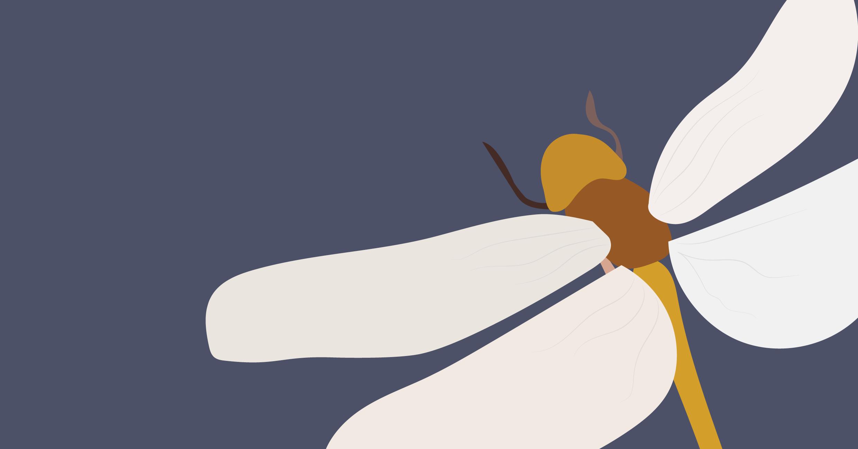 Dragonfly Banner.jpg