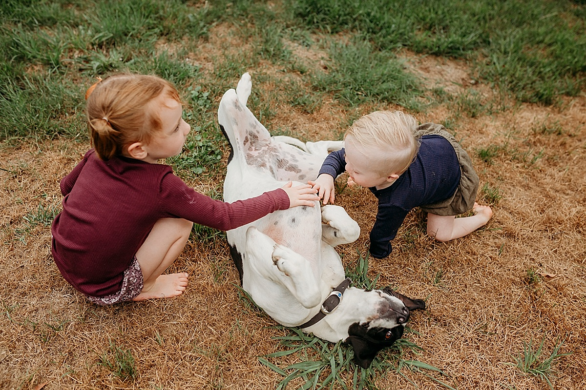 kids giving dog a belly rub