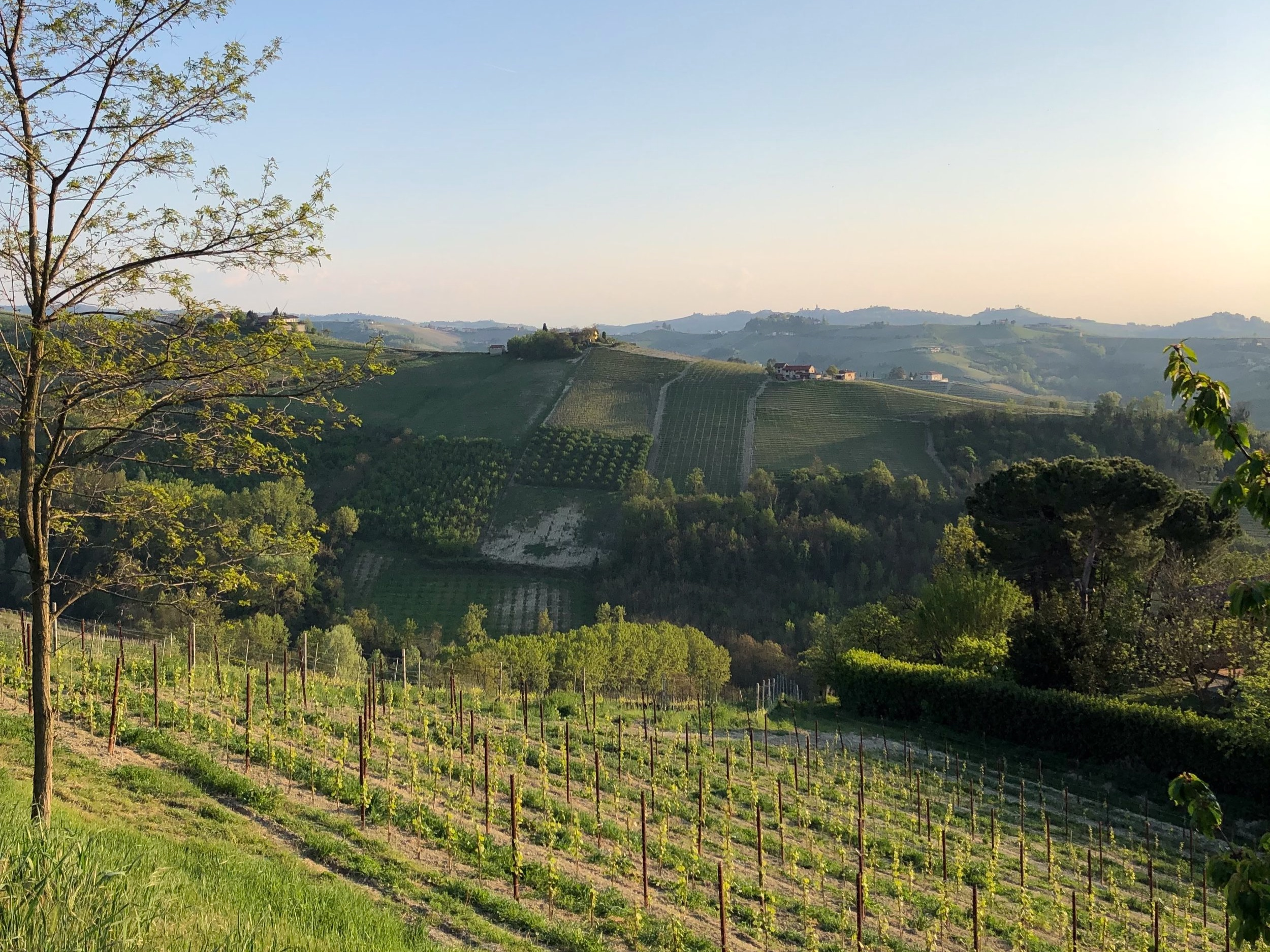 - Background picture: Spring time in Barbaresco, Piedmont