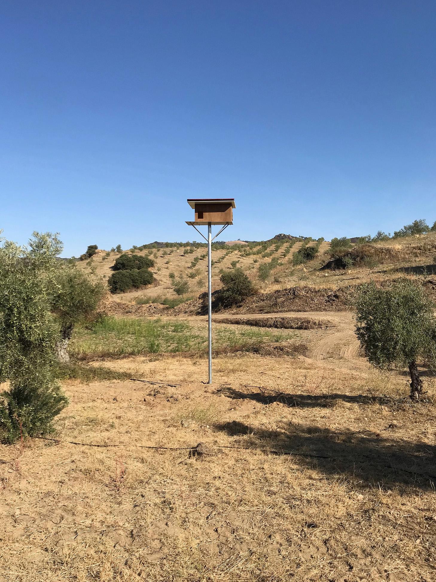 Caixa ninho para coruja das torres (Tyto alba)