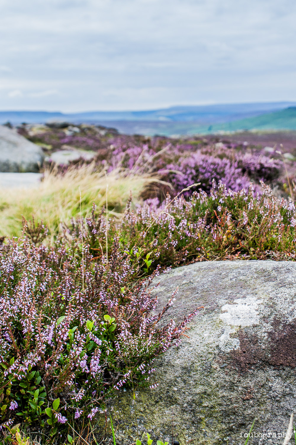Heather & Rocks in Summer   @Stanage Edge - Nature Photography - 2015_