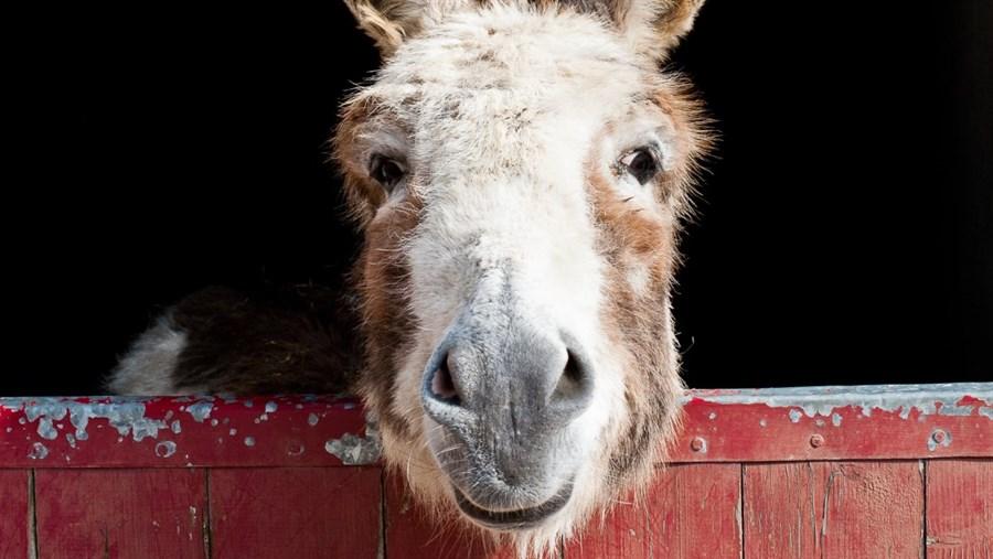 Do_Donkeys_act_1.jpg