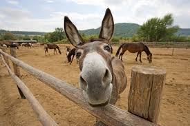 Willem Dafoe is this guy's spokes-donkey