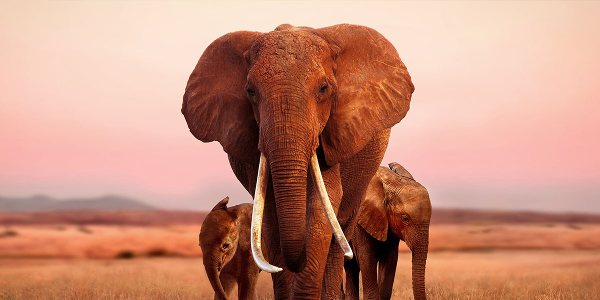 The Elephant Queen: a family story for the ages.