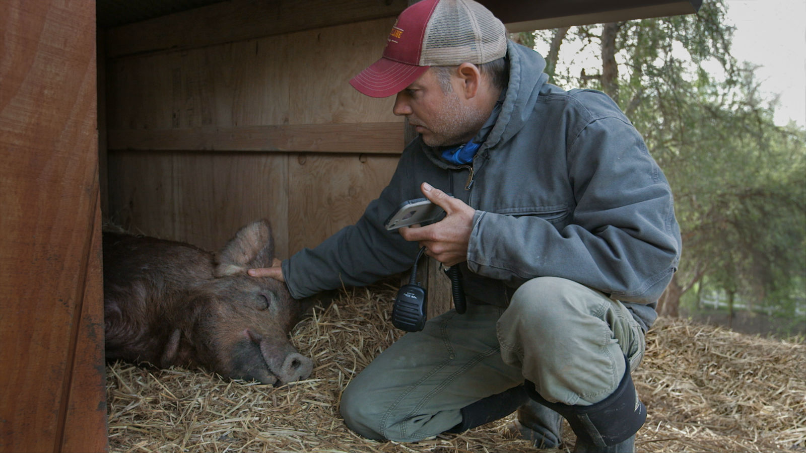 Filmmaker John Chester with Emma the pig.