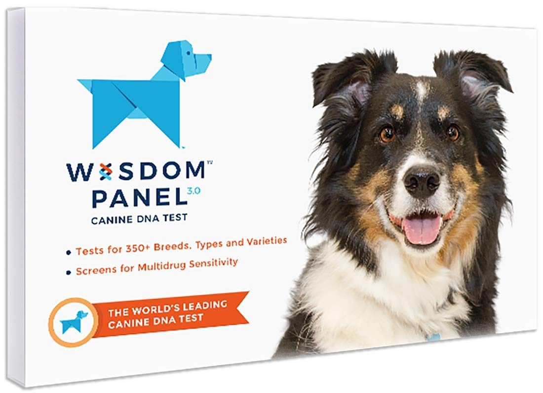 Gifts for the dog lover:  A new trend for dog lovers, a DNA test for your pooch. Adopting dogs is becoming more and more popular, and we don't always know our pup's background. This is a very practical and thoughtful gift for the dog lovers out there.   //source