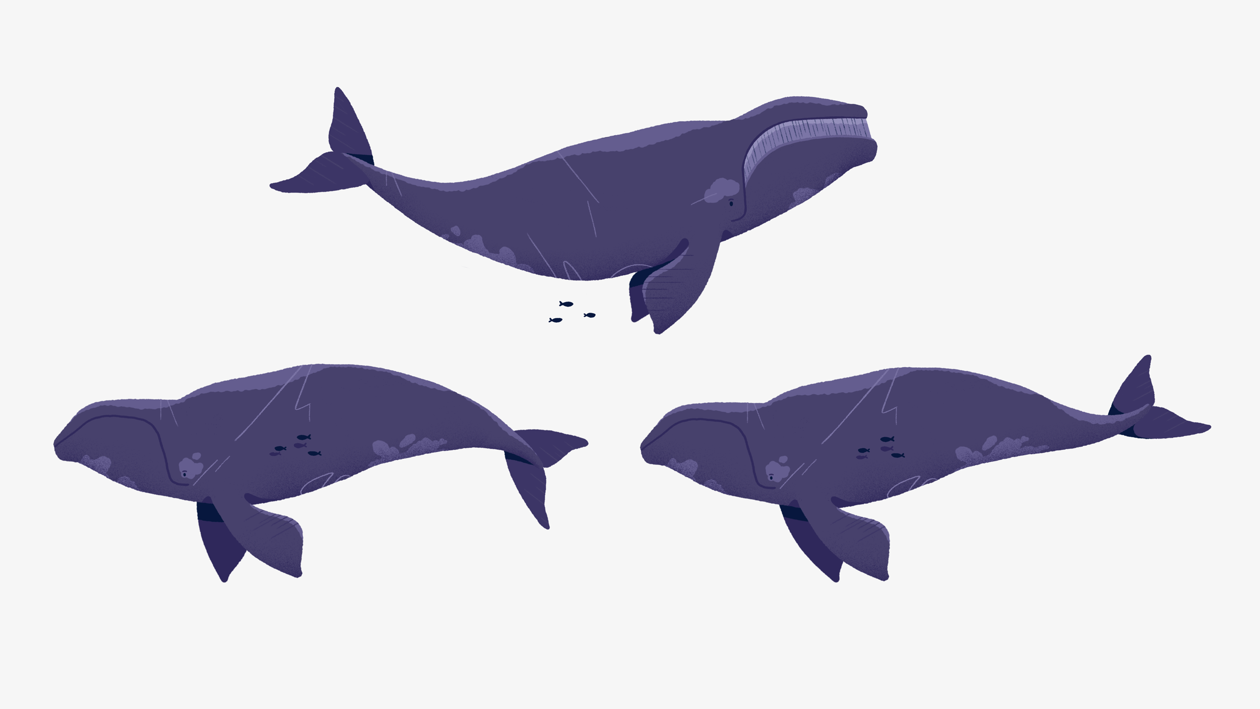 NFB_whales.png