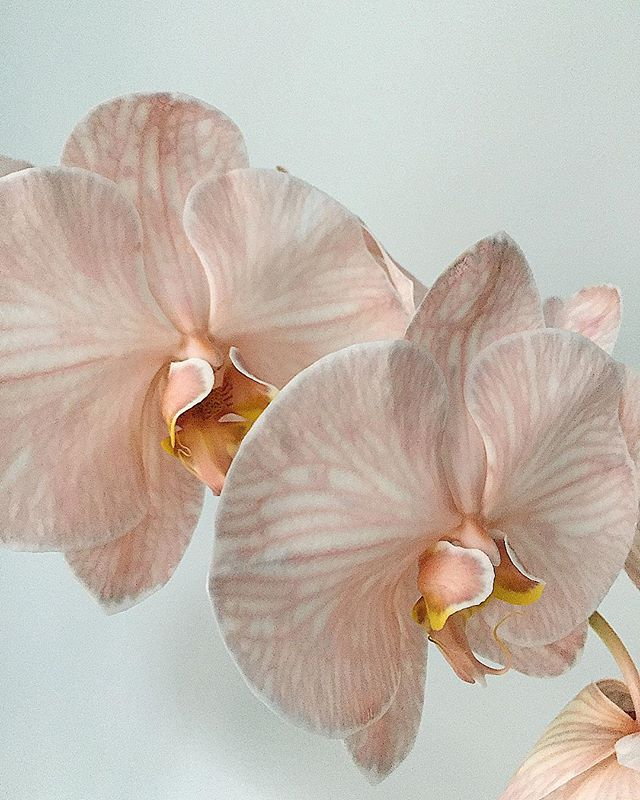 ☄️☄️☄️ #ljbannister #flowerdealers