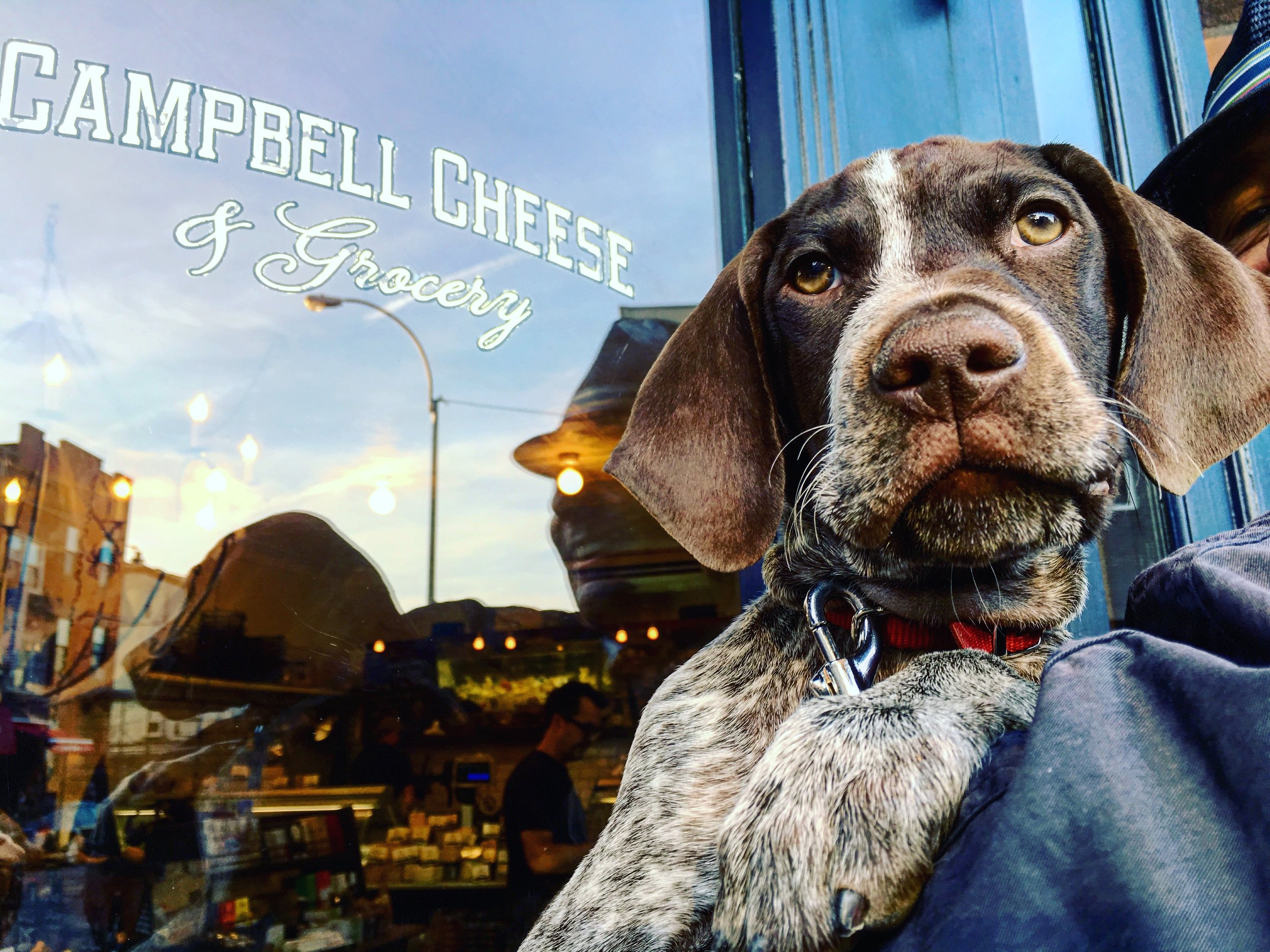 Campbell Cheese Dog
