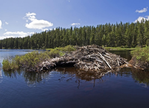 beaver-house-beautiful-calm-lake-55604532.jpg