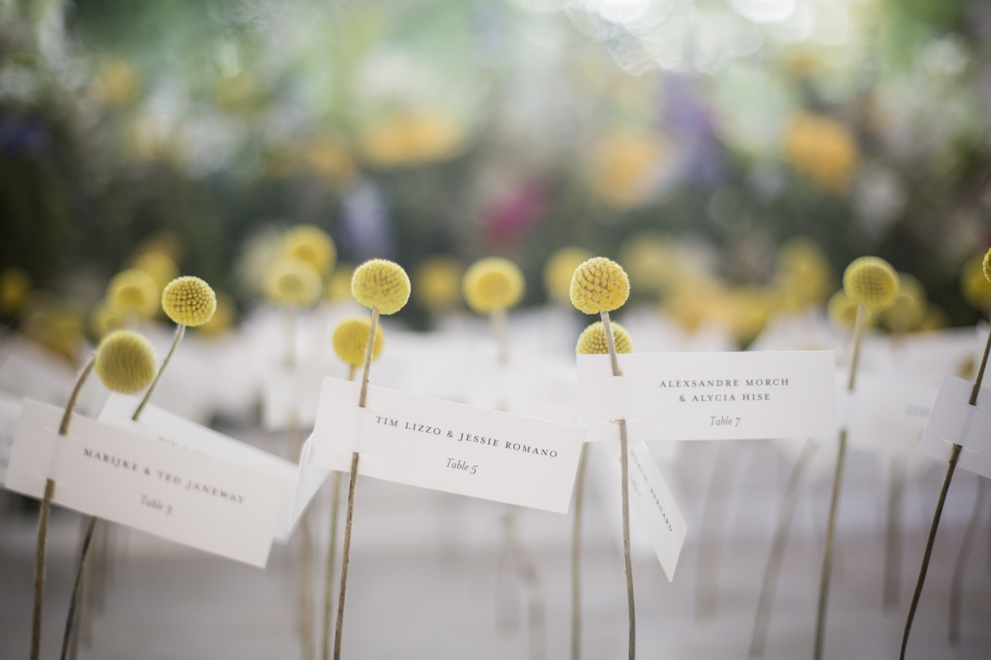 Craspedia place card display