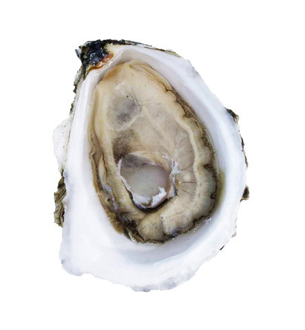 The Only 7 Things You Need To Know About Oysters -