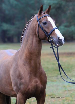 RoyalBlend-AdorfBuste-T-Ernst-092.jpg