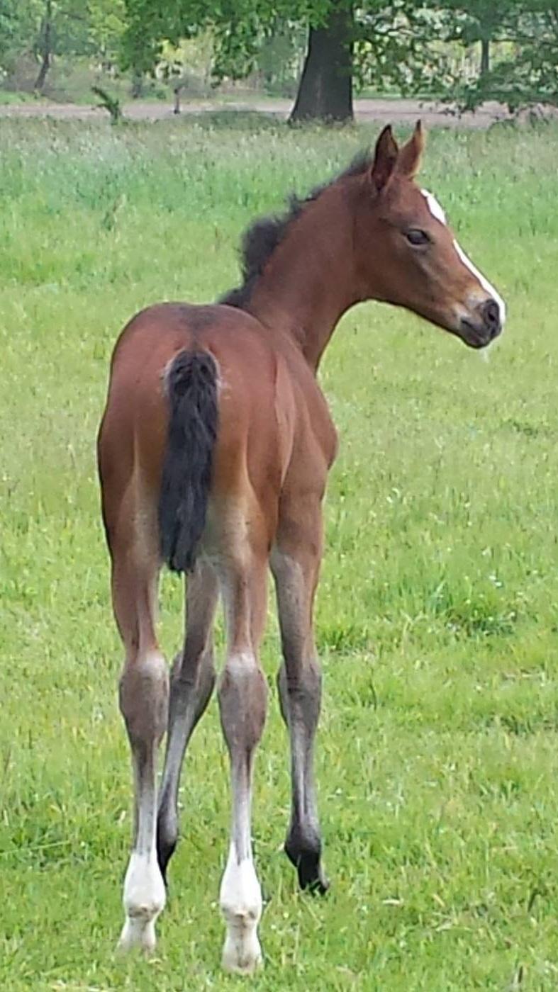 RMS+foal.jpg