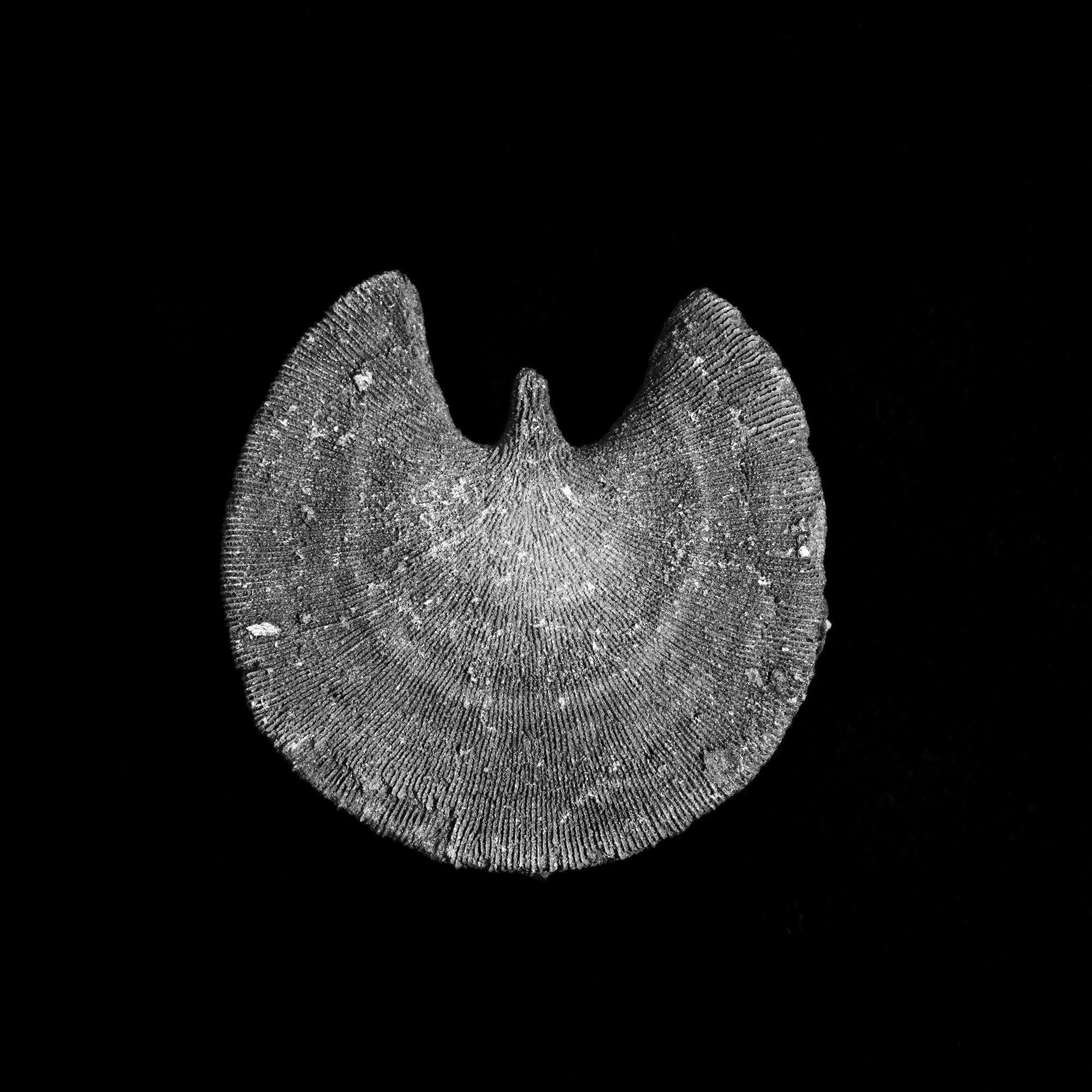 FU Fossils_67_01.jpg