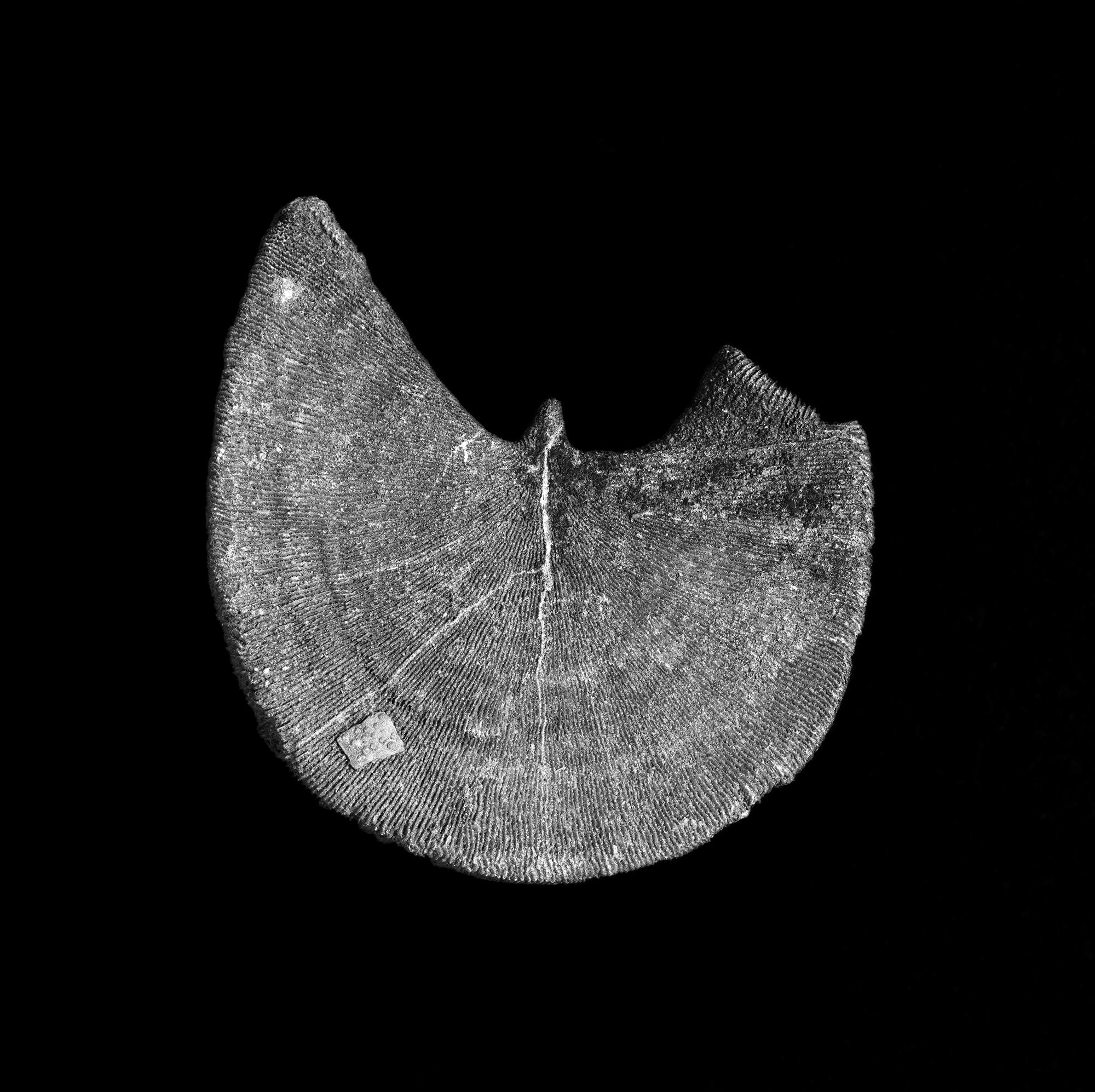 FU Fossils_66_02.jpg