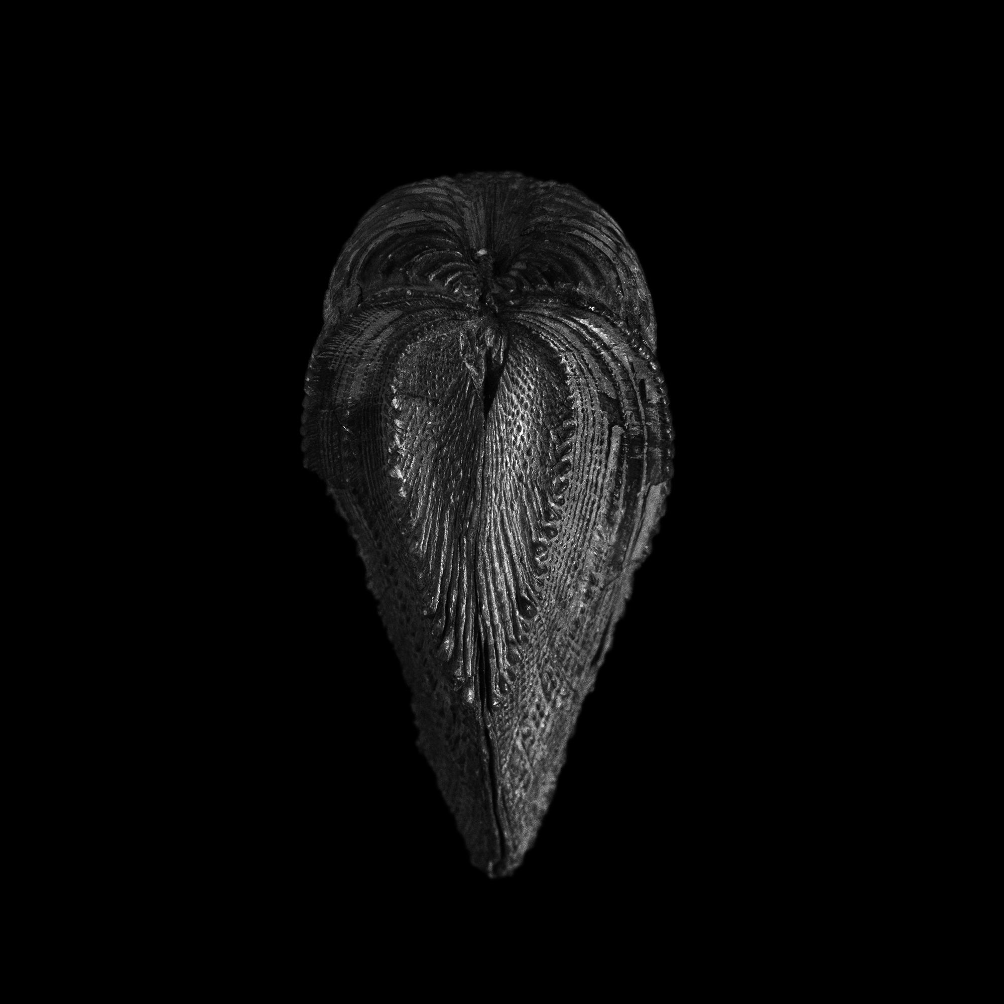 FU Fossils_46_02.jpg