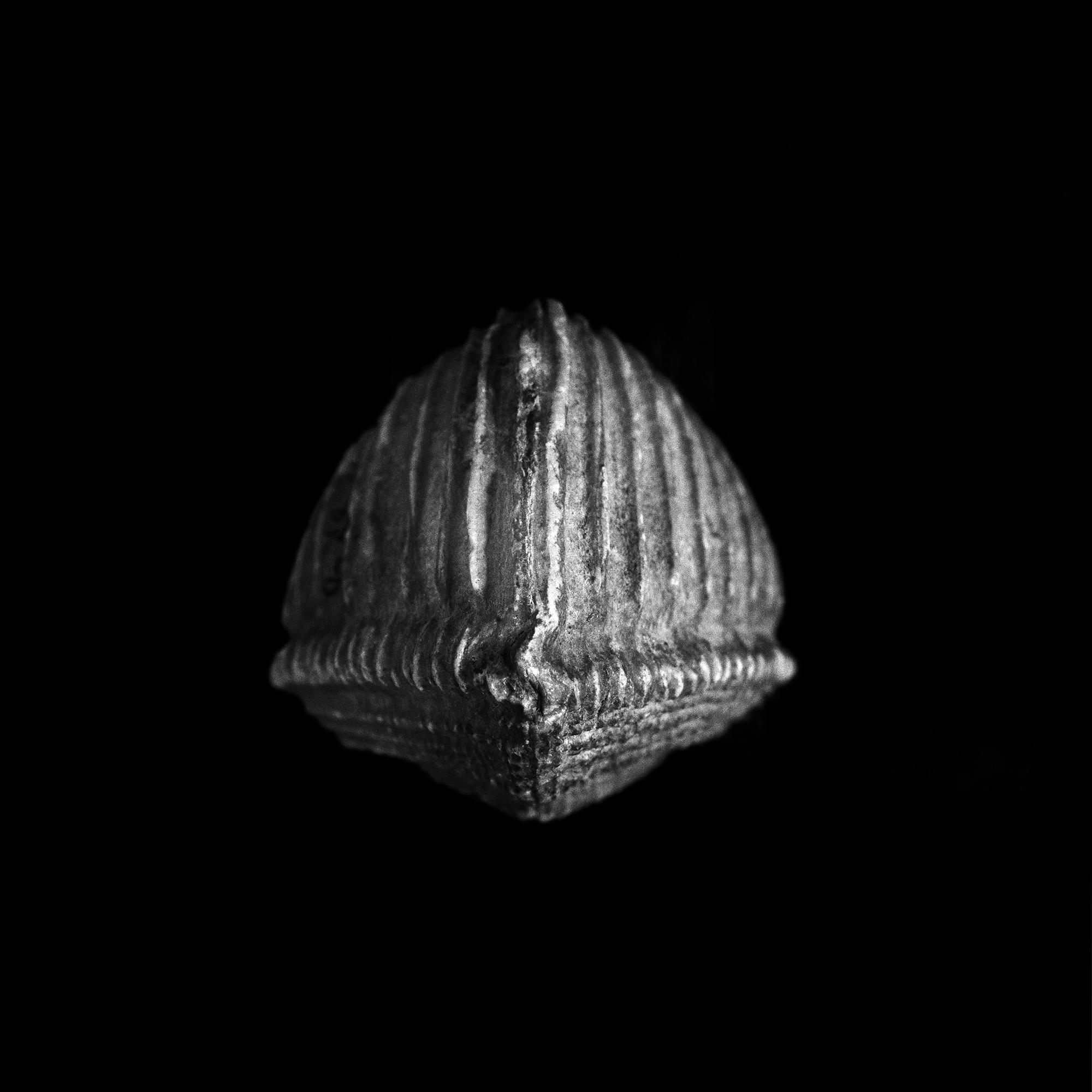 FU Fossils_39_01.jpg