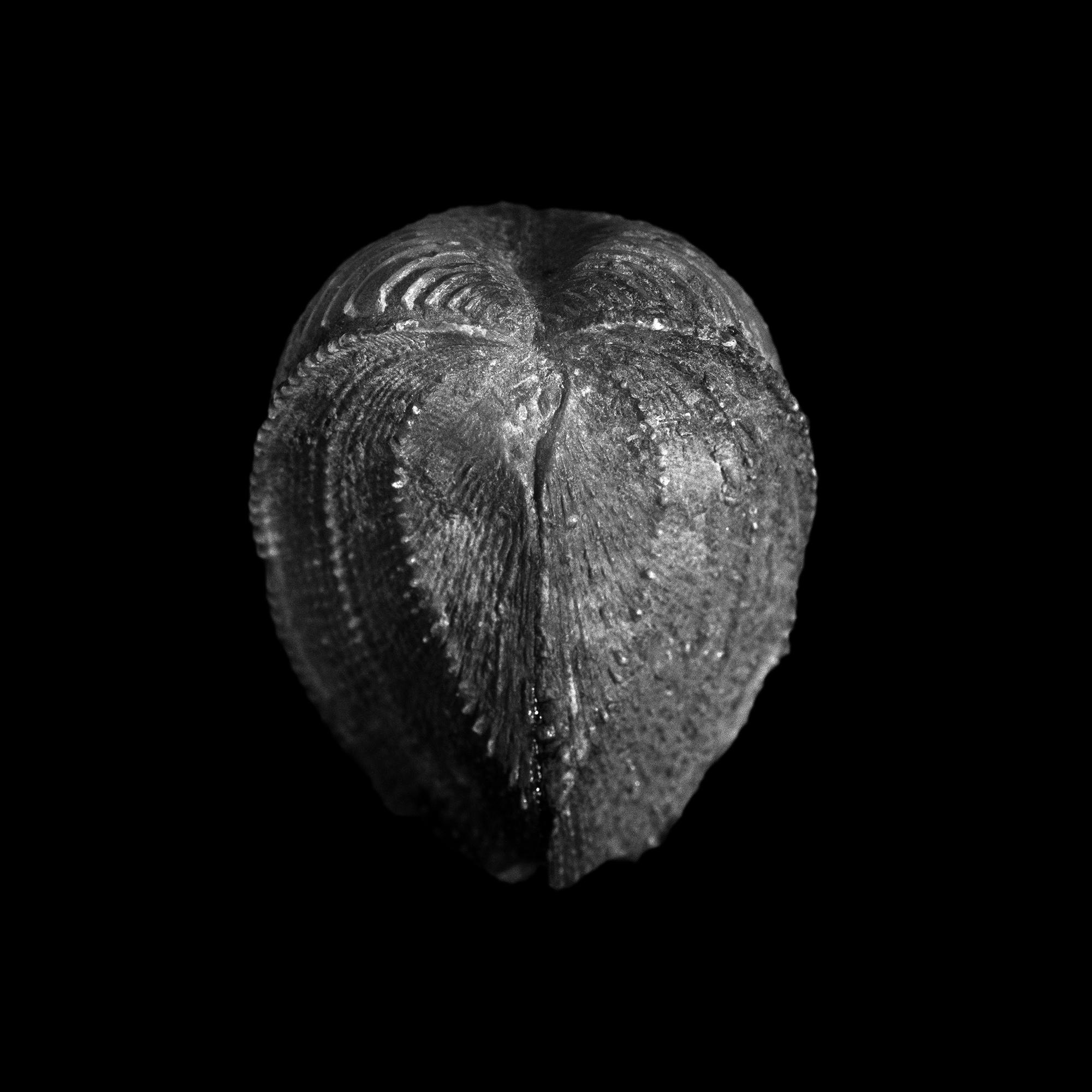 FU Fossils_37_02.jpg